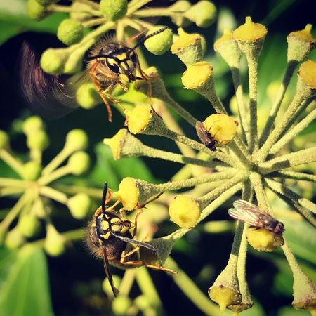 Wasp Beauty In Nature Insect Animals In The Wild Flower One Animal Outdoors No People Animal Themes Nature Garden