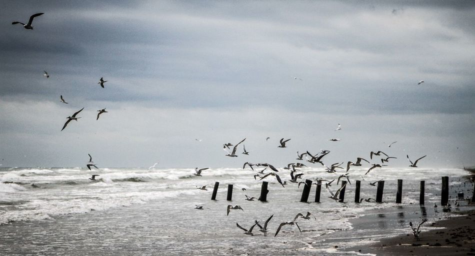 Animal Themes Animals In The Wild Beach Bird Birds Birds Of EyeEm  Black And White Challenge Cold Day Escaping Flock Of Birds Flying Nature No People One Animal Outdoors Side View Travel Travel Photography Traveling Vacations Weather Wildlife Winter