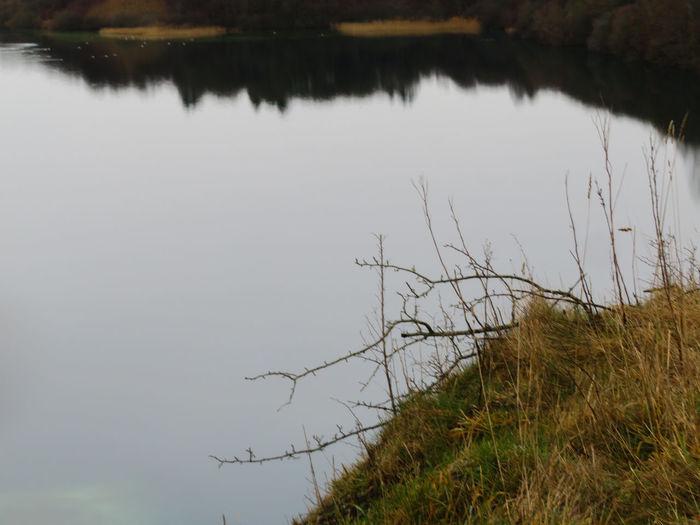 Water Tree Bird Lake Reflection Grass Landscape