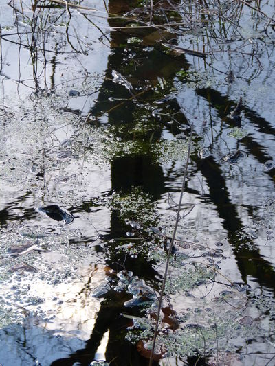 Magic garden pond ... :-) Beauty In Nature Clouds Water Day Garden Art Garden Art. Lake Magic Art Nature Nature Art Photography No People Outdoors Pond Reflections Pond View Pond Water Reflection Sky Water Plans Tree And Sky Tree Art Tree Branches Tree Silhouette Water Water Art Water Leaves Colour Photography Water Reflections Water Tree Sky Nature