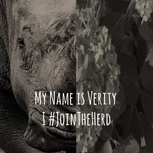 Join The Herd Against Poaching Check This Out Hello World Rhinoceros Rhino Elephant Elephants Nature Endangered Species Endangered Animals Endangered  Alert Action Help Hidden Gems  Stop Poaching