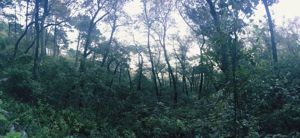 Green Color Forest Tree WoodLand Hojas Hojas De Otoño Tranquility Hojas Verdes, Hojas Y Ramas Green Green Green Green!  Monterrey Chipinque