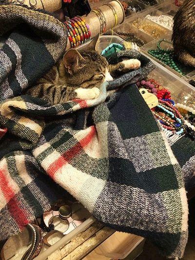 Bi' kedi gördüm sanki 🐈 Sleepy Kitty Store Neckless & Bracelet Cat Lovers Cat High Angle View No People Indoors  Textile Sunlight Pattern Full Frame