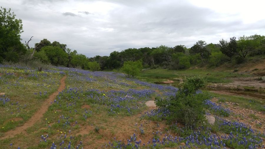 Beauty In Nature Bluebonnet Cloud - Sky Day Growth Landscape Nature No People Outdoors Plant Scenics Sky Tranquil Scene Tranquility Tree Water Lost In The Landscape