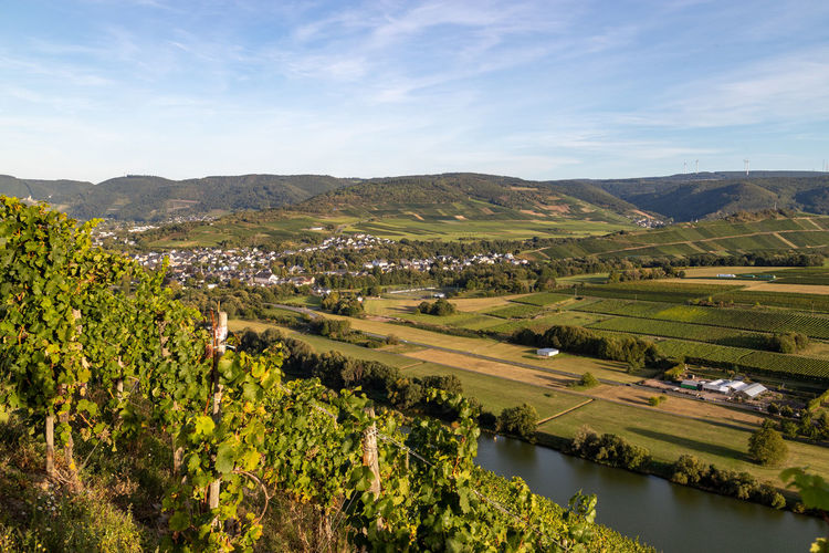 Panoramic view of the moselle valley with the wine village mülheim in the background