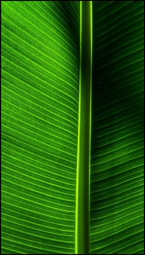 🍃💚🍃 Simple Textures Green Textures And Surfaces Green Color Nature Full Frame Leaf Backgrounds No People Close-up Beauty In Nature Macro Beauty Maximum Closeness Macro_collection Abstract Photography Abstract From The Archives
