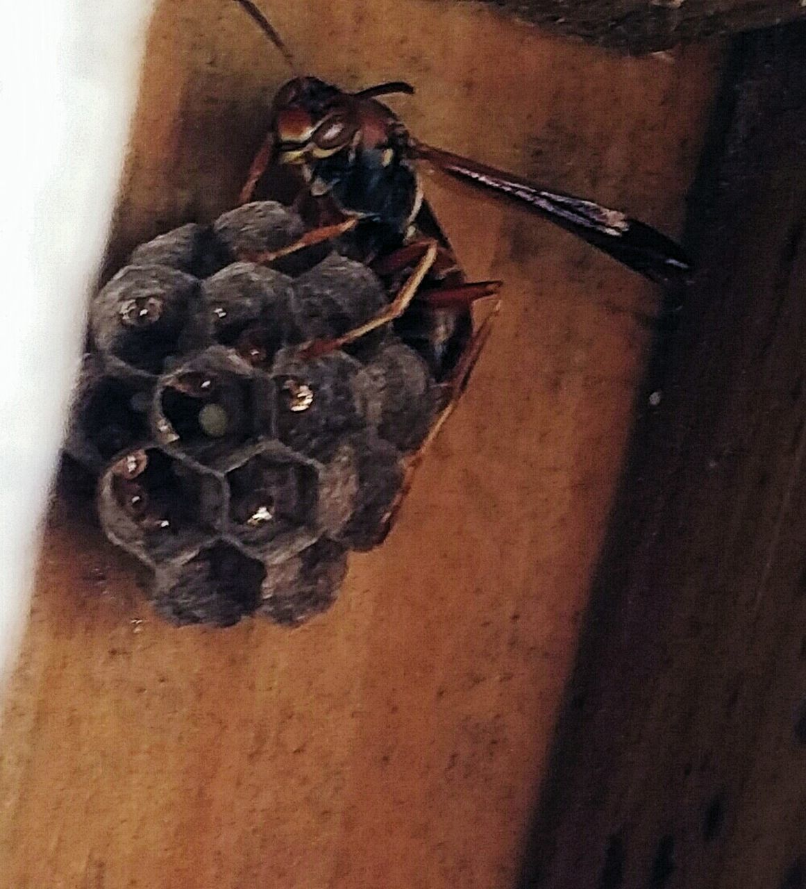 animal themes, insect, close-up, animals in the wild, no people, one animal, indoors, day, nature