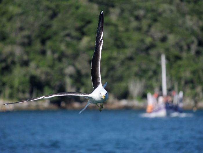Búzios, praia da concha 🐚 Pelican Ibis Fishing Rod Fishing Gray Heron White Stork Shore Stork Sea Bird Preening Taking Off Fishing Pole