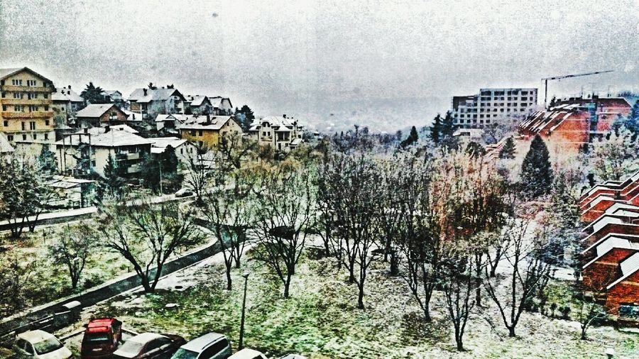 Outdoors Tree No People Day View From My Window Fogscape Foggyday Belgradephoto Belgrade,Serbia Cold Morning Coldoutside Cold Weather Cold And Frosty Firs Day Of Winter