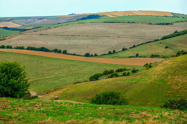 South Downs Sussex Downs Sussex Countryside Wheat Field Beauty In Nature Environment Field Grass Green Color Hay Bales Hay Bales On Field Land Landscape Mountain Nature No People Non-urban Scene Outdoors Plant Rolling Hillside Scenics - Nature Sky South Downs National Park Tranquil Scene Tranquility