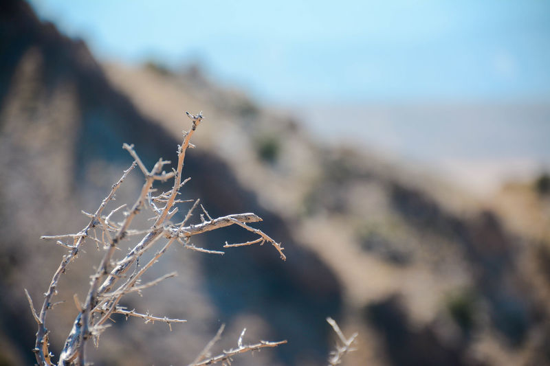 Desert Dinosaur National Monument Arid Climate Branch Close-up Mountain Scenics Selective Focus