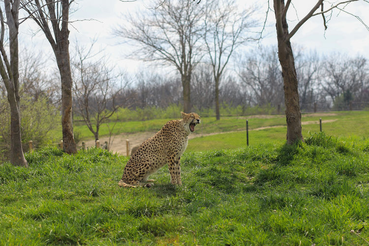 View of an animal on land