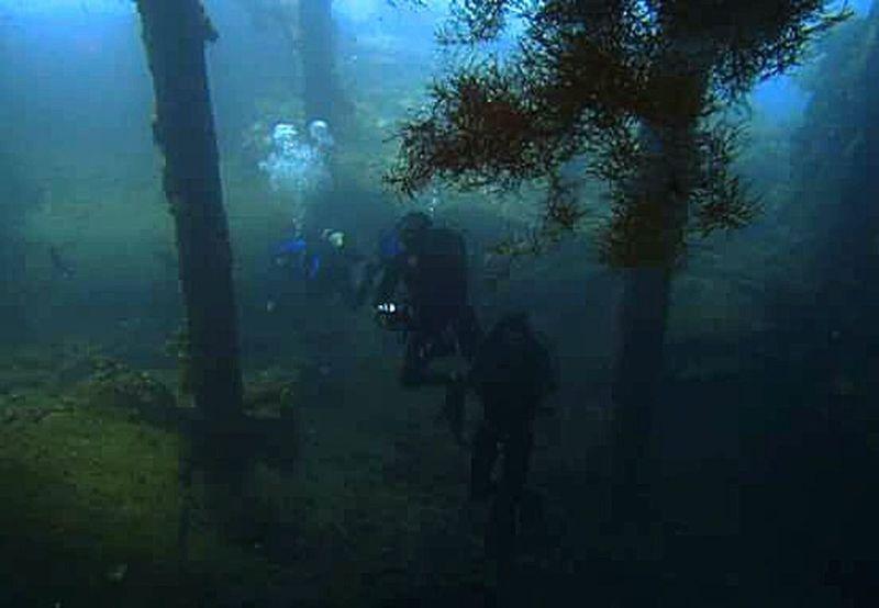 Scuba Diving Underwater Photography Bali Tulamben Overhead