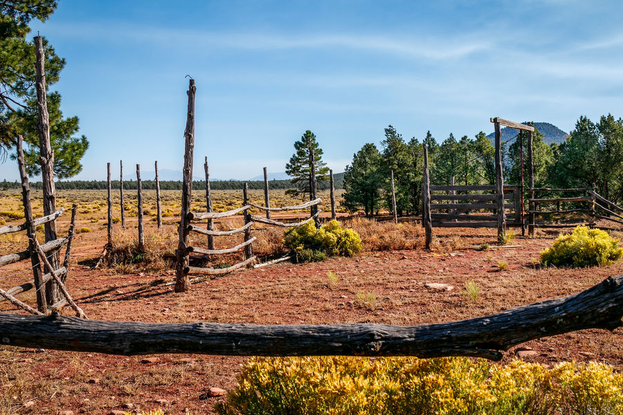 Old corral in rural Arizona. Arizona Old . Beauty In Nature Cloud - Sky Corral Day Field Nature No People Outdoors Sky Sunlight Tree Wood - Material