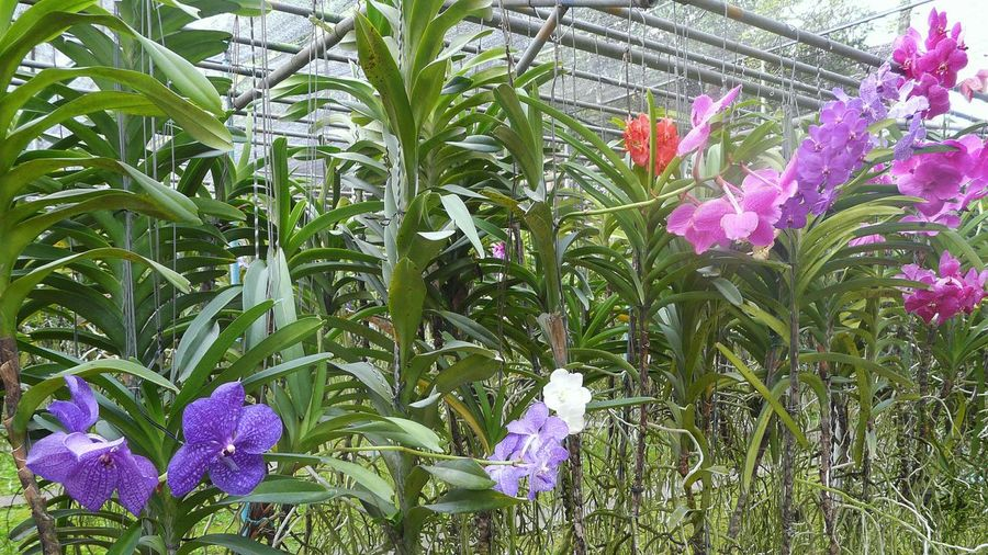 Tropical Orchids Tropical Tropical Plants Flowers Greenhouse Flowers,Plants & Garden Plant Nursery Orchideen Orchidées Serre Orchids EyeEm App No People