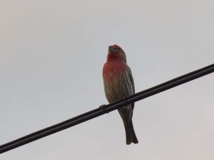 Bird Perching Animal Wildlife Red One Animal Animals In The Wild No People Day Outdoors Animal Themes Full Length Nature Beauty In Nature Close-up Sky