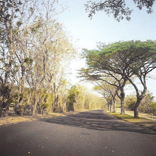 Africa Ala Banten