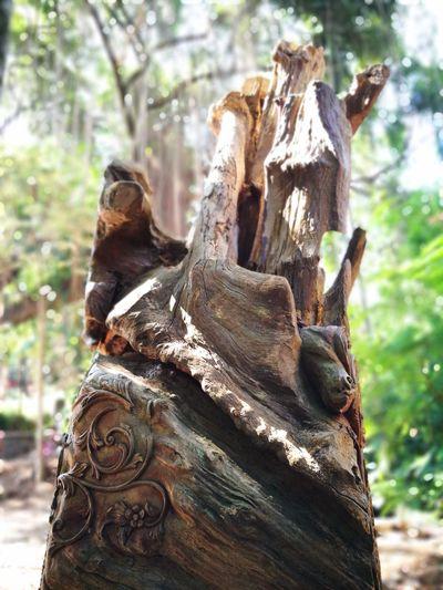 wood EyeEm Selects Tree Tree Trunk Close-up