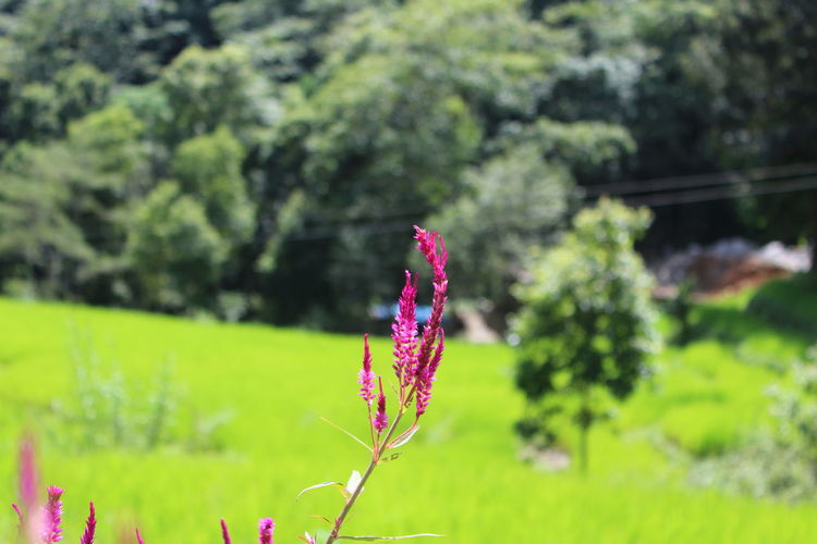 Middle of Nowhere between the mountains Beauty In Nature Blooming Close-up Day Field Flower Flower Head Focus On Foreground Fragility Freshness Green Color Growth Nature No People Outdoors Petal Plant Tree