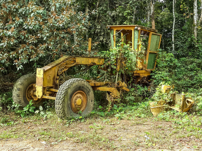 Abandoned large yellow grader overgrown by jungle vegetation near border between Nigeria and Cameroon, Africa. Cameroon Grader Machine Machinery Nigeria Overgrown West Africa Africa Day For Forest Growth Jungle Nature No People Outdoors Overgrown And Beautiful Overgrowth Plant Rain Forest Rainforest Transportation Tree Vehicle Yellow