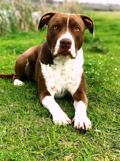 Portrait of dog sitting on field