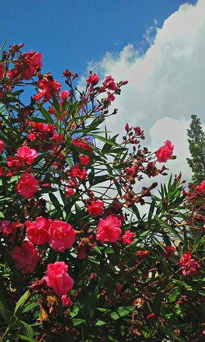 Flowers In The Sky Beauty Nature