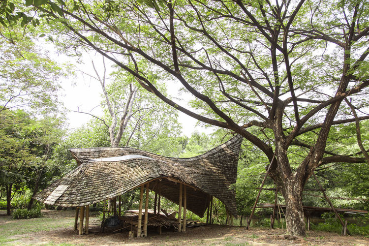 Beautiful Mini bamboo house. Tree Plant Nature Growth Day No People Tranquility Wood - Material Branch Tree Trunk Forest Land Trunk Outdoors Beauty In Nature Tranquil Scene Seat Park Landscape Wood Bamboo Bamboo - Material House Hut ASIA Asian  Organic Texture Simple Life Lifestyle