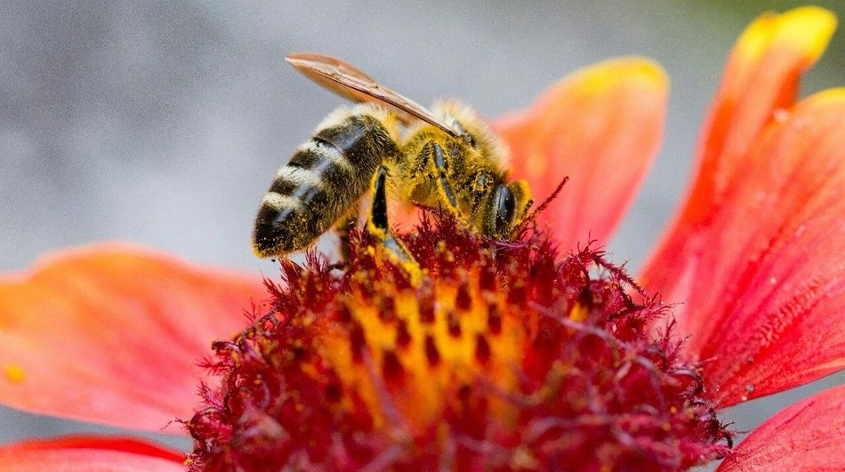 Bee Flower Wasp Nature