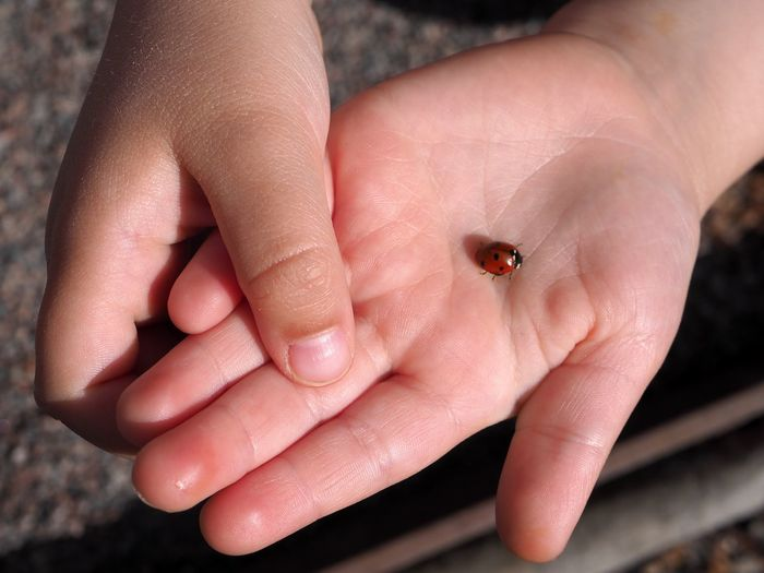 Human Hand Human Body Part One Person Hand Animal Wildlife One Animal Animals In The Wild Finger Body Part Real People Human Finger Insect Close-up Invertebrate Day Unrecognizable Person Focus On Foreground Outdoors Small Marine Lady Bug Marienkäfer Nyckelpiga Child Childhood Holding Carefulness Showing