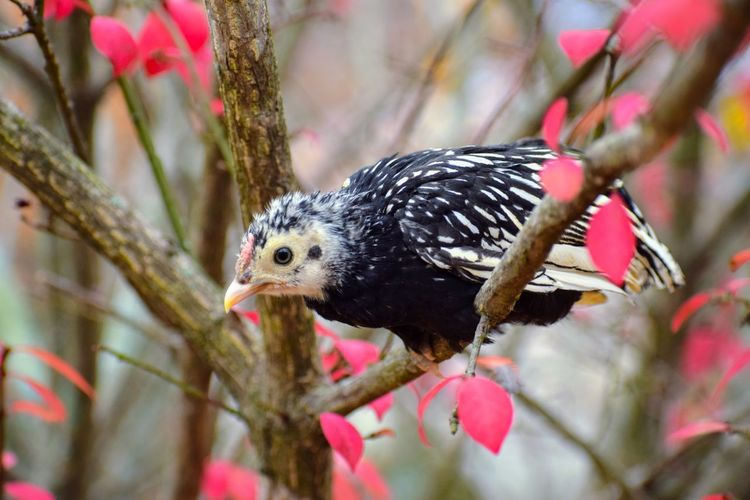 Close-up of a bird perching on branch