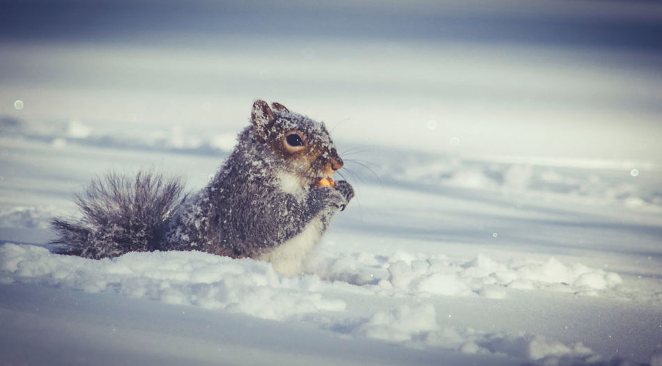 Close-up of squirrel eating nut on snow against sky