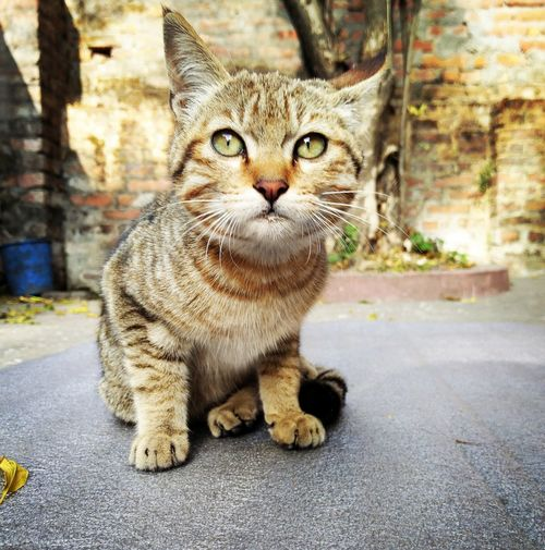 Animallovers Rescuecat Littleballoffur Cuteness Overload!! Kitten Kitty Catlover Catloversworld Animal Photography Animal_collection Animal Portrait Mobilephotography
