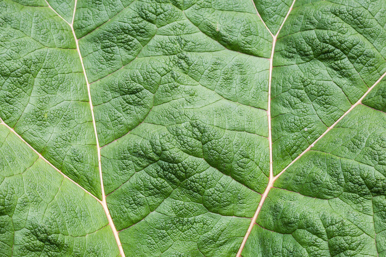 leaf, green color, full frame, no people, nature, day, backgrounds, close-up, outdoors, freshness