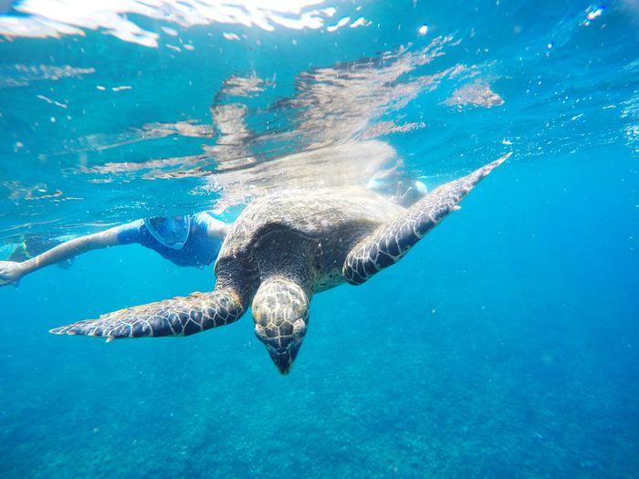 Man Swimming With Turtle In Sea
