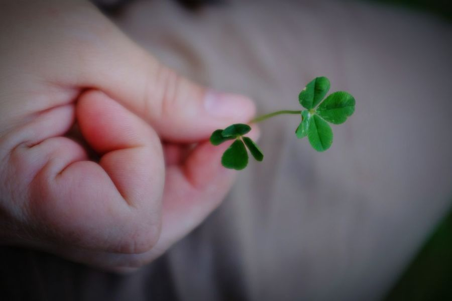 Daily double Luck Of The Irish Fourleafclover Check This Out A Day In The Life Luckygirl