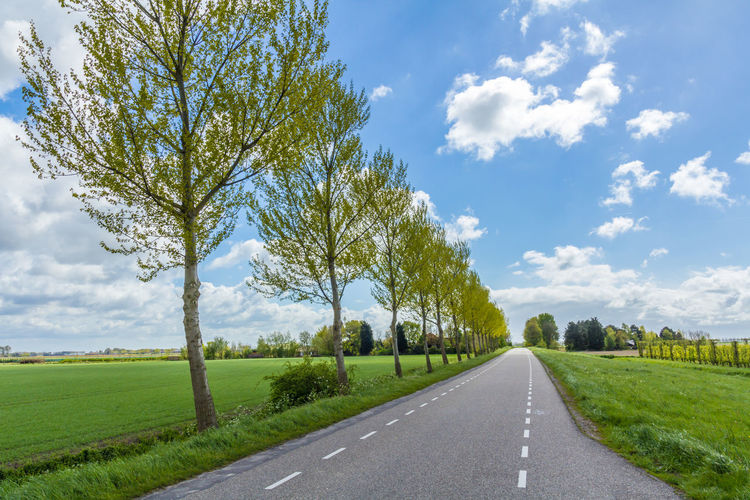 tree lined road leading into the distance on dutch dike Field Road Cloud - Sky Concept Countryside Dike Diminishing Perspective Field Grass Green Color Landscape Nature No People Outdoors Road Symbol The Way Forward Tranquil Scene Tranquility Transportation Treelined
