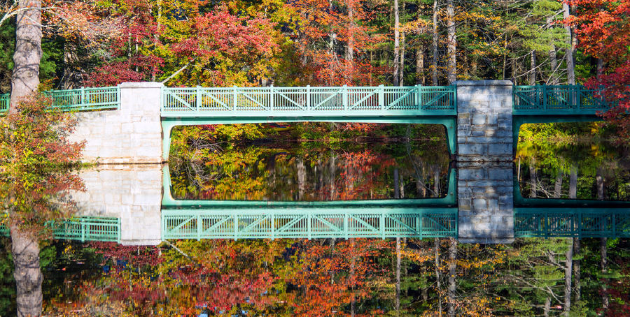 Twin bridges... Autumn Architecture Beauty In Nature Bridge Built Structure Change Color Day Forest Leaf Nature No People Outdoors Reflections Tree Water