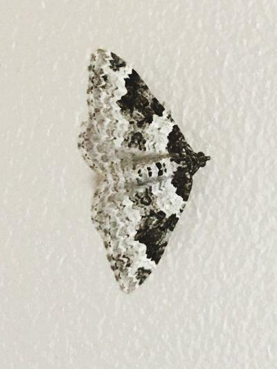 Indoor Butterfly