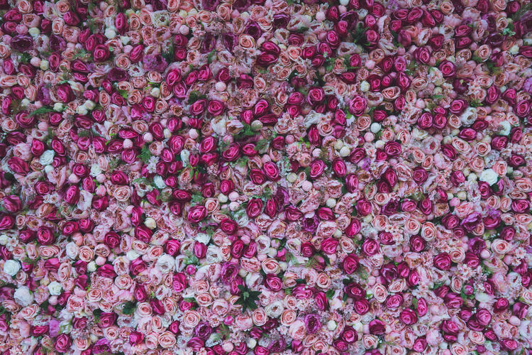 Abundance Backgrounds Beauty In Nature Flower Flower Head Flowering Plant Fragility Freshness Full Frame High Angle View Large Group Of Objects Nature No People Petal Pink Color Plant
