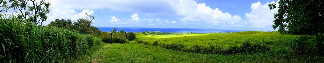 Staycation Hakalau, Hawaii Travel Beauty In Nature Boyds Of Paradise Cloud - Sky Green Color Growth Landscape Nature Non-urban Scene Panoramic Plant Rolling Landscape Scenics - Nature Sky Tranquil Scene Tranquility Zip Isle