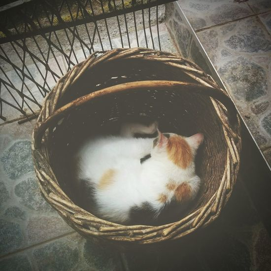 For gathering eggs? Nah, this basket's for me. Kitten Cats Cat In Basket Chat Snoozing Kitty Hey Look Farm Life