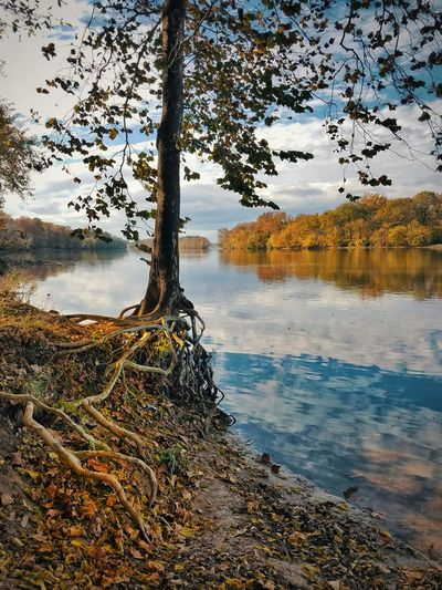 Nature No People Beauty In Nature Horizon Over Water Landscape Tranquility Symmetry Daylight Day Forest Perspectives On Nature Autumn Collection Virginia Is For Lovers Autumn Colors Scenics Outdoors Reflection Tree Beauty In Nature Fall Beauty Autumn Water Sunlight Roots Of Tree - Roots Of Life Root
