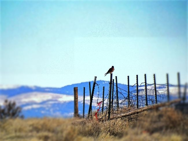Sky Nature No People Outdoors Animal Wildlife Bird Day Animals In The Wild Animal Themes Worland Worland WY Wyoming FencePost