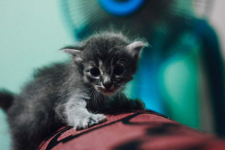 Close-up portrait of kitten at home