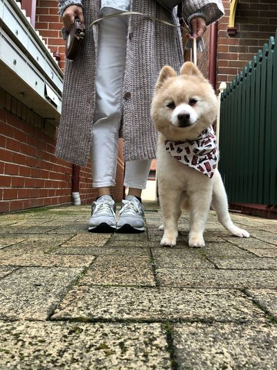 Doggo Day Spa Sunday 🦁 German Spitz Dogs Of EyeEm Sydney Local Everyday Joy Pet Portraits Mammal Pets Dog Canine Domestic Animals One Animal Domestic Vertebrate Real People Leash Day Low Section Architecture Pet Leash Standing People Built Structure Lifestyles Outdoors Pet Owner