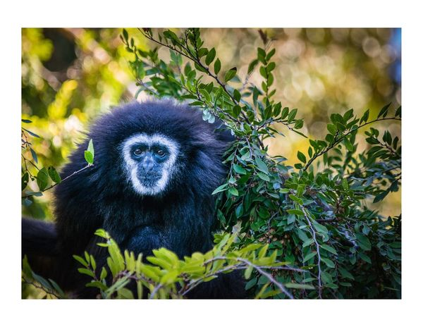 One Animal Animals In The Wild No People Nature Day Animal Themes Mammal Outdoors Animal Wildlife Plant Gorilla Tree Close-up Portrait Monkey Monkeyman Zoo