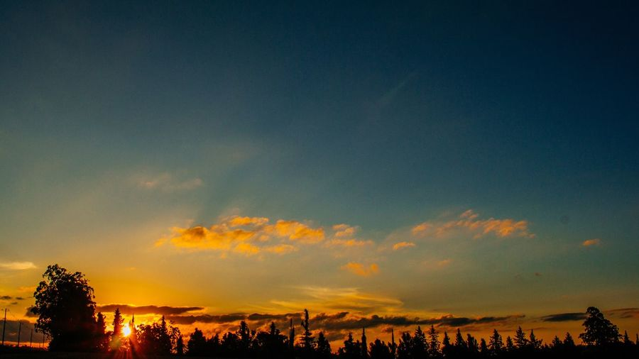 Panoramic view of trees against sky during sunset