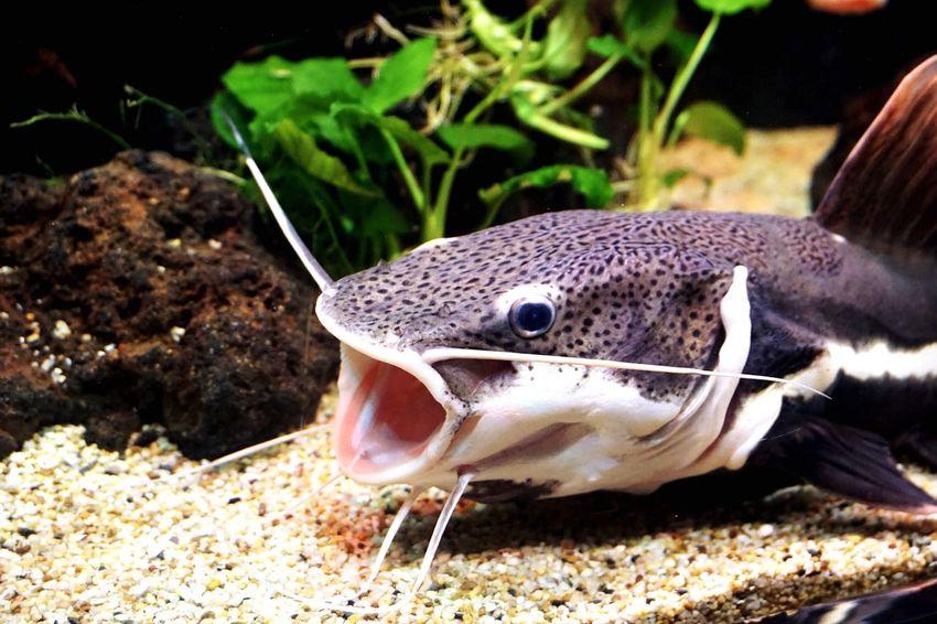 EyeEmNewHere Animal Themes Catfish