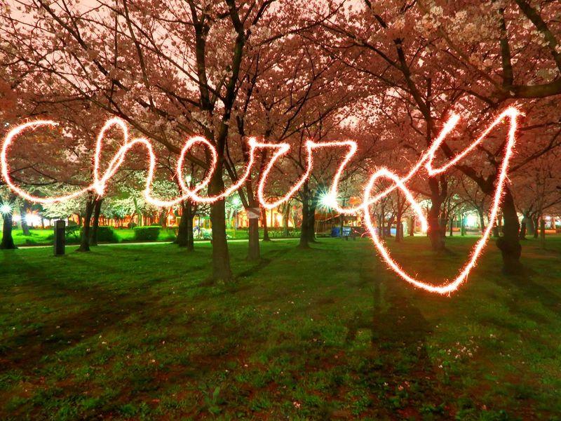 城北公園 千林 Taking Photos Cherry Blossoms Cherryblossom Fireworks Nightphotography Osaka,Japan Japan 花見