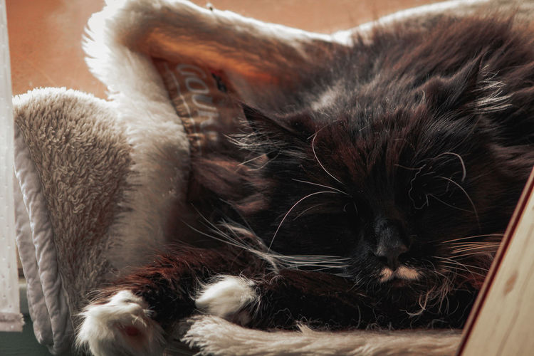 Close-up of kitten sleeping at home